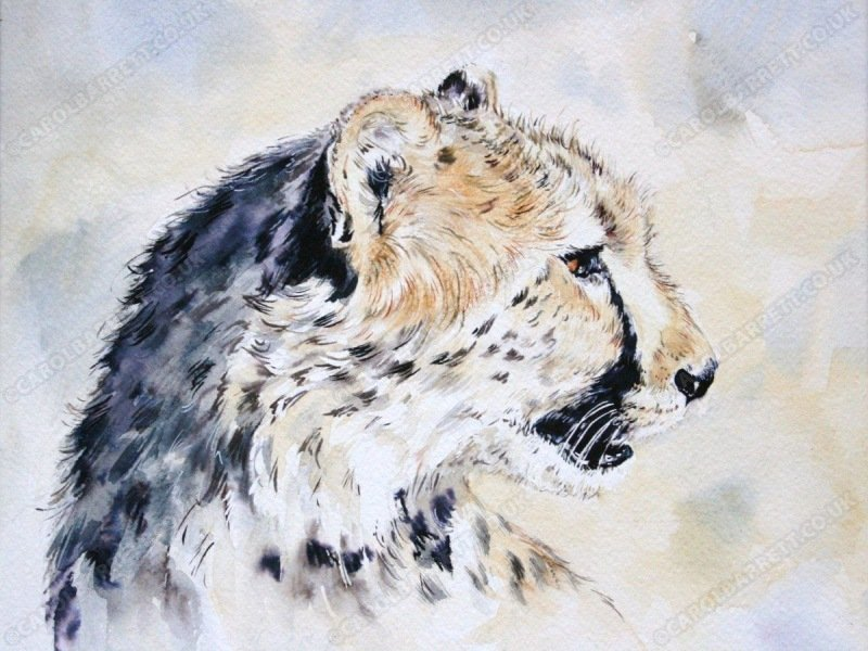 "<span style=""float:left"">Savannah cat ~ donated to Sketch for Survival</span> <span style=""float:right""><a href=""https://www.carolbarrett.co.uk/paintings/savannah-cat/?from=/cheetah-sold/"">More info »</a></span>"
