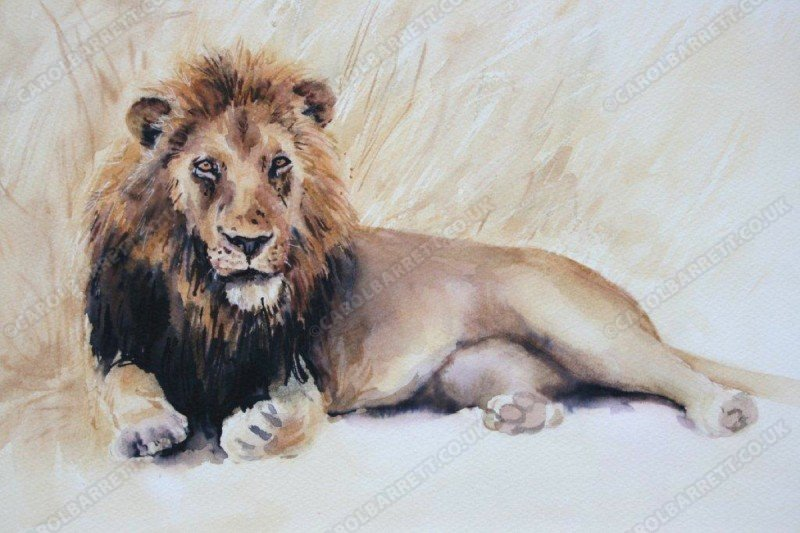"<span style=""float:left"">Seasoned Warrior</span> <span style=""float:right""><a href=""https://www.carolbarrett.co.uk/paintings/seasoned-warrior/?from=/big-cats-sold/"">More info »</a></span>"