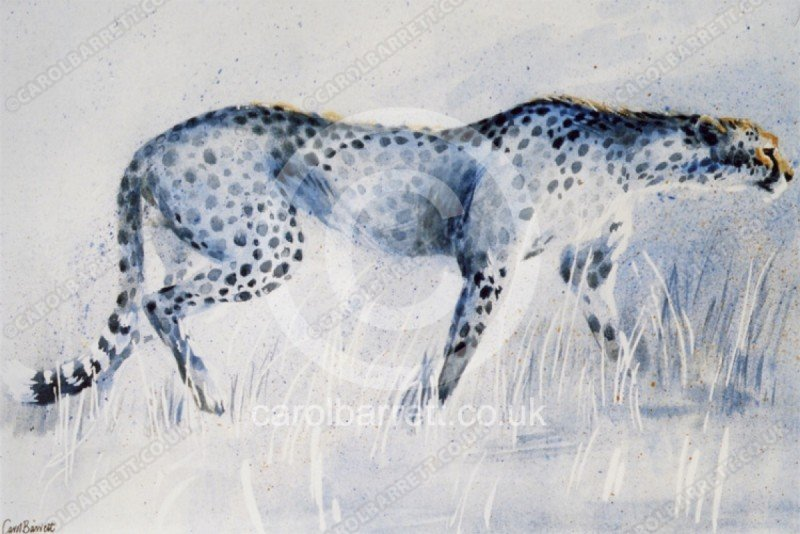 "<span style=""float:left"">Slowly Stalking (cheetah) ~ donated to The Cheetah Conservation Fund</span> <span style=""float:right""><a href=""https://www.carolbarrett.co.uk/paintings/slowly-stalking-cheetah/?from=/cheetah-sold/"">More info »</a></span>"