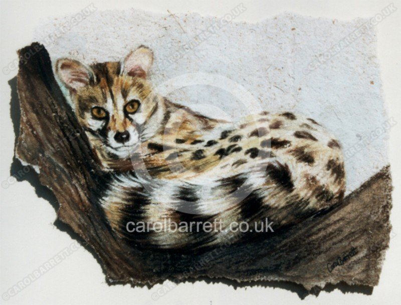 "<span style=""float:left"">Small spotted genet</span> <span style=""float:right""><a href=""https://www.carolbarrett.co.uk/paintings/small-spotted-genet/?from=/on-specialty-paper-sold/"">More info »</a></span>"