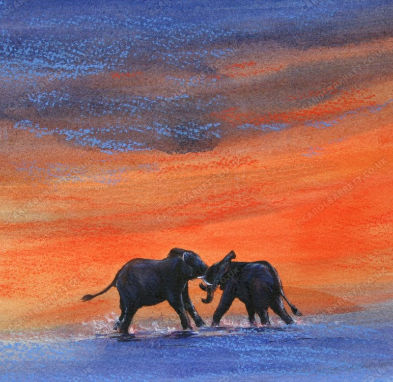 "<span style=""float:left"">Sparring at sunset</span> <span style=""float:right""><a href=""https://www.carolbarrett.co.uk/paintings/sparring-at-sunset/?from=/elephants-sold/page/3/"">More info »</a></span>"