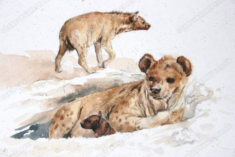 """<span style=""""float:left"""">Spotted Hyena lair</span><span style=""""float:right""""><a href=""""https://www.carolbarrett.co.uk/paintings/spotted-hyaena-lair/?from=/wild-dog-hyena-for-sale/"""">More info »</a></span>"""