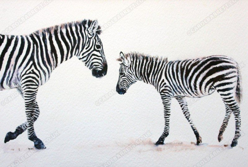 "<span style=""float:left"">Stripe recognition – Plains Zebra</span> <span style=""float:right""><a href=""https://www.carolbarrett.co.uk/paintings/stripe-recognition-plains-zebra/?from=/african-wildlife-sold/"">More info »</a></span>"