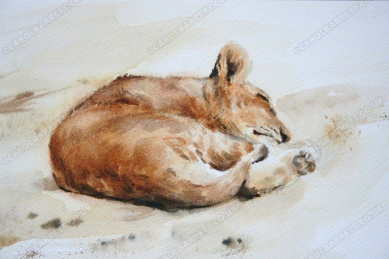 "<span style=""float:left"">Sweet dreams</span> <span style=""float:right""><a href=""https://www.carolbarrett.co.uk/paintings/sweet-dreams/?from=/big-cats-sold/"">More info »</a></span>"