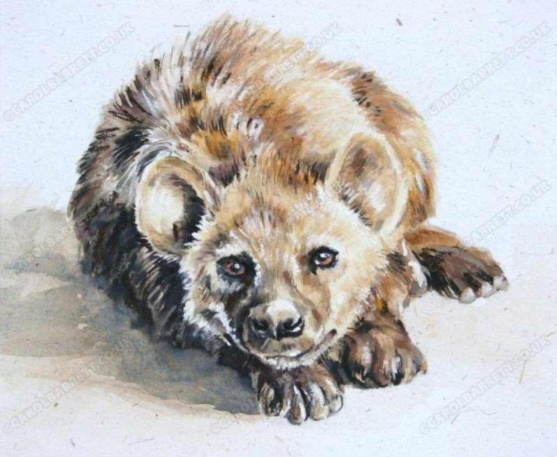 """<span style=""""float:left"""">Unfair reputation</span><span style=""""float:right""""><a href=""""https://www.carolbarrett.co.uk/paintings/unfair-reputation/?from=/wild-dog-and-hyena-sold/"""">More info »</a></span>"""