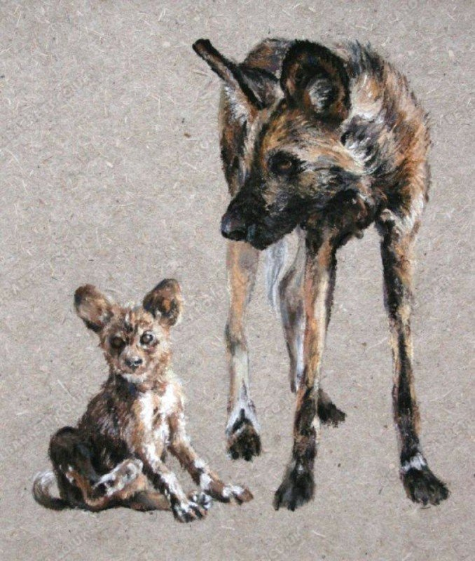 """<span style=""""float:left"""">Waiting for pup – African Wild Dog</span><span style=""""float:right""""><a href=""""https://www.carolbarrett.co.uk/paintings/waiting-for-pup-african-wild-dog/?from=/wild-dog-and-hyena-sold/"""">More info »</a></span>"""