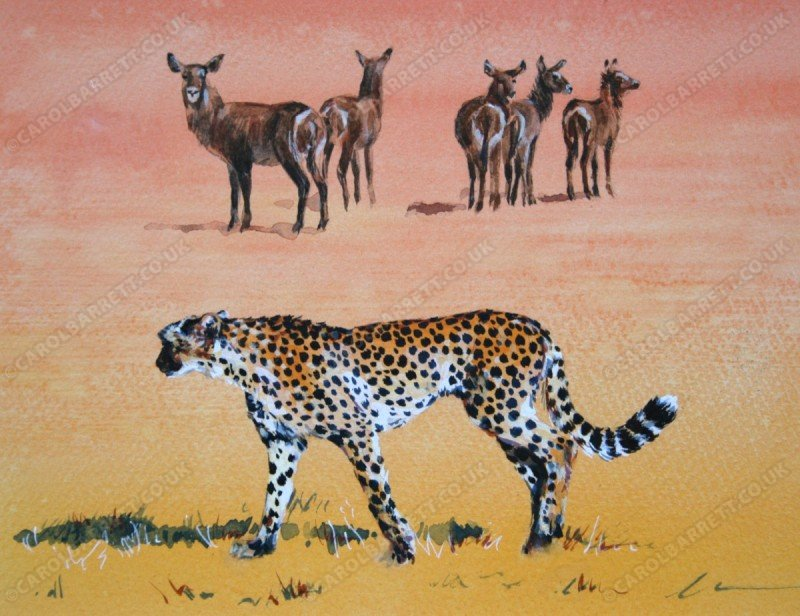 "<span style=""float:left"">Wary Waterbuck</span> <span style=""float:right""><a href=""https://www.carolbarrett.co.uk/paintings/wary-waterbuck/?from=/cheetah-sold/"">More info »</a></span>"