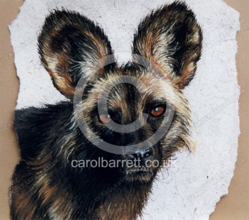 """<span style=""""float:left"""">Wild dog (alpha male)</span><span style=""""float:right""""><a href=""""https://www.carolbarrett.co.uk/paintings/wild-dog-alpha-male/?from=/wild-dog-and-hyena-sold/"""">More info »</a></span>"""