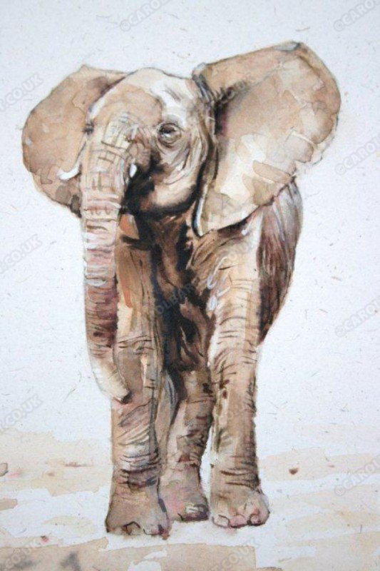 "<span style=""float:left"">Young tembo</span> <span style=""float:right""><a href=""https://www.carolbarrett.co.uk/paintings/young-tembo/?from=/elephants-sold/"">More info »</a></span>"