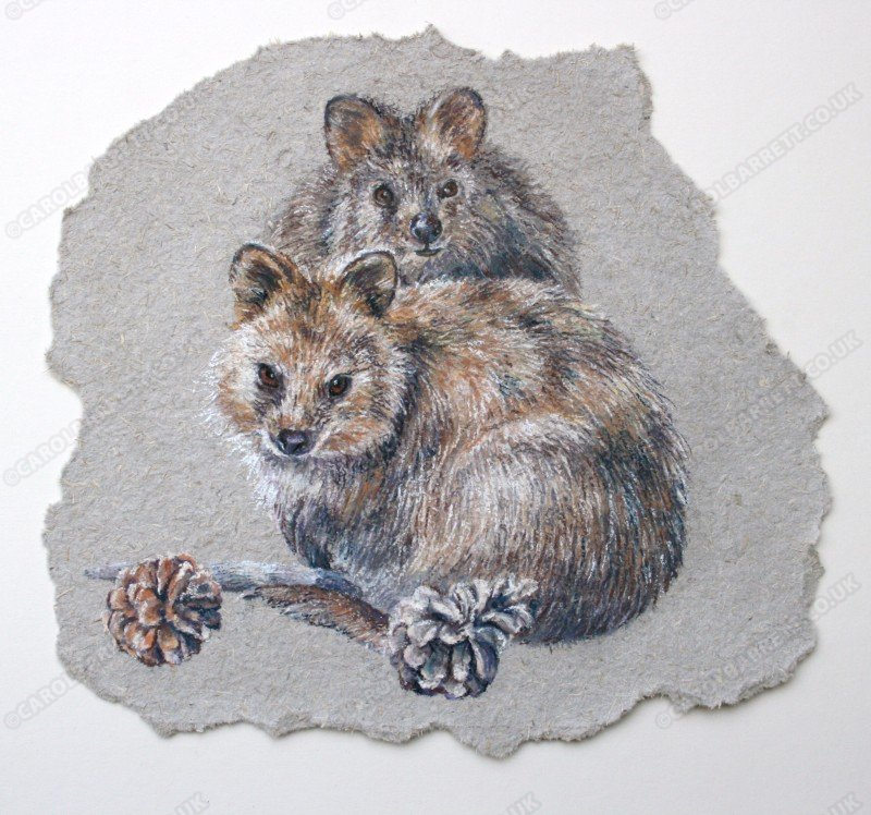 "<span style=""float:left"">Quokka</span> <span style=""float:right""><a href=""https://www.carolbarrett.co.uk/paintings/1509/?from=/australian-wildlife-for-sale/"">More info »</a></span>"