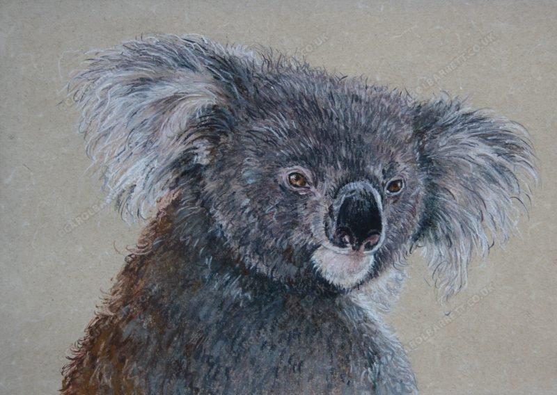 """<span style=""""float:left"""">Papa Joe</span><span style=""""float:right""""><a href=""""https://www.carolbarrett.co.uk/paintings/papa-joe/?from=/australian-wildlife-for-sale/"""">More info »</a></span>"""