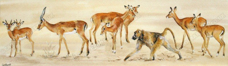 "<span style=""float:left"">Symbiosis (Impala and Chacma baboon)</span> <span style=""float:right""><a href=""https://www.carolbarrett.co.uk/paintings/symbiosis-impala-and-chacma-baboon-2/?from=/african-wildlife-for-sale/"">More info »</a></span>"