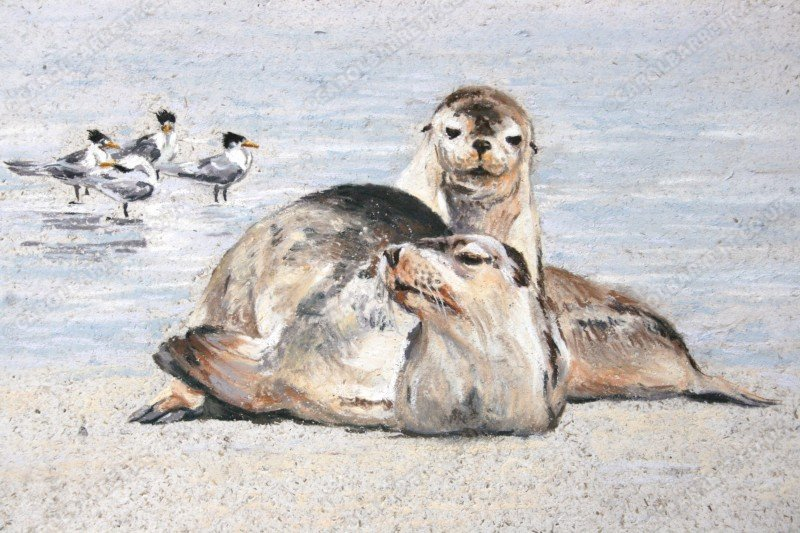 "<span style=""float:left"">Australian Sea lion</span> <span style=""float:right""><a href=""https://www.carolbarrett.co.uk/paintings/australian-sea-lion/?from=/australian-wildlife-for-sale/"">More info »</a></span>"