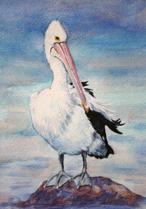 """<span style=""""float:left"""">Australian Pelican</span><span style=""""float:right""""><a href=""""https://www.carolbarrett.co.uk/paintings/australian-pelican-2/?from=/australian-wildlife-for-sale/"""">More info »</a></span>"""