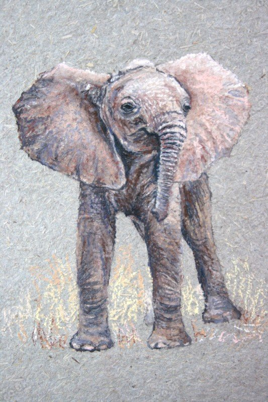 "<span style=""float:left"">Baby Tembo</span> <span style=""float:right""><a href=""https://www.carolbarrett.co.uk/paintings/baby-tembo/?from=/on-specialty-paper-sold/"">More info »</a></span>"