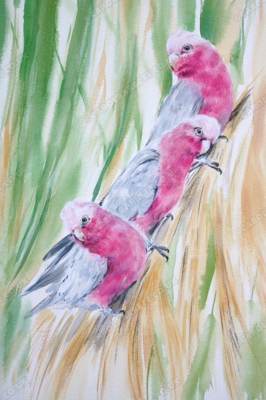 "<span style=""float:left"">Galah Trio</span> <span style=""float:right""><a href=""https://www.carolbarrett.co.uk/paintings/galah-trio/?from=/australian-wildlife-for-sale/"">More info »</a></span>"