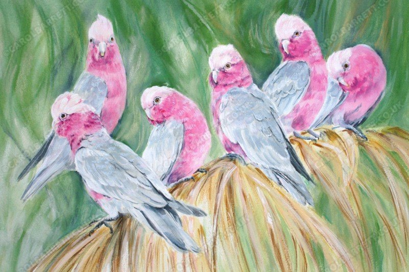 "<span style=""float:left"">Pretty in Pink ~ Galah Cockatoo</span> <span style=""float:right""><a href=""https://www.carolbarrett.co.uk/paintings/pretty-in-pink-galah-cockatoo/?from=/birds-for-sale/"">More info »</a></span>"