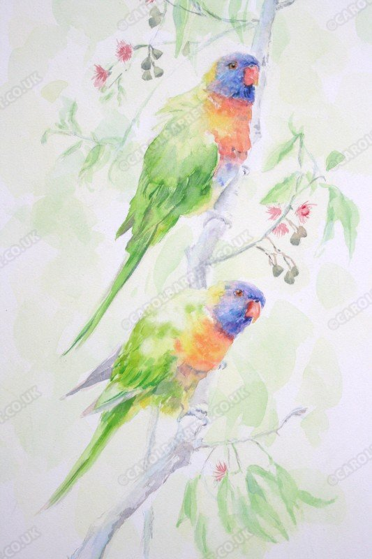 "<span style=""float:left"">Rainbow Lorikeet</span> <span style=""float:right""><a href=""https://www.carolbarrett.co.uk/paintings/rainbow-lorikeet/?from=/birds-for-sale/"">More info »</a></span>"