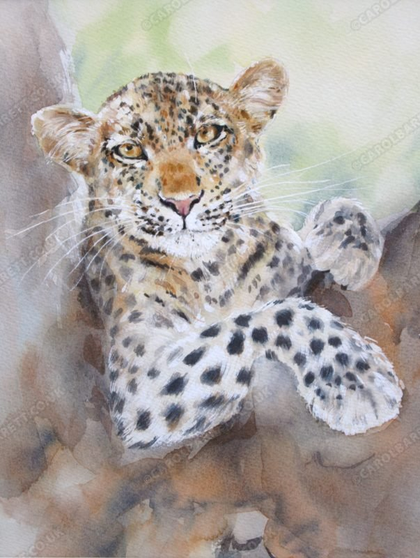 "<span style=""float:left"">Almost Snooze time</span> <span style=""float:right""><a href=""https://www.carolbarrett.co.uk/paintings/almost-snooze-time/?from=/big-cats-sold/page/2/"">More info »</a></span>"