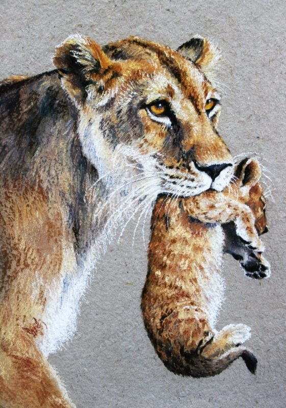 "<span style=""float:left"">Gently does it</span> <span style=""float:right""><a href=""https://www.carolbarrett.co.uk/paintings/gently-does-it/?from=/big-cats-sold/"">More info »</a></span>"