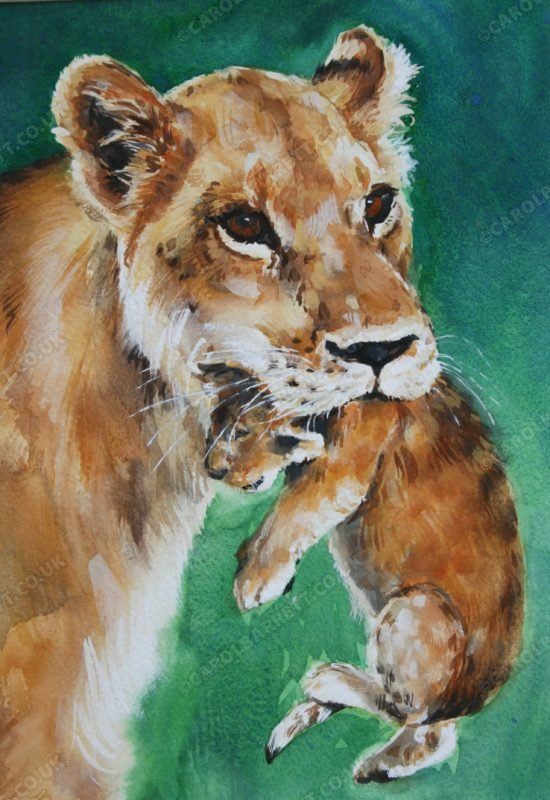 "<span style=""float:left"">Softly, softly</span> <span style=""float:right""><a href=""https://www.carolbarrett.co.uk/paintings/softly-softly/?from=/big-cats-sold/"">More info »</a></span>"