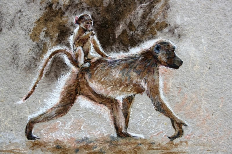 "<span style=""float:left"">Easy Rider ~ Chacma Baboon</span> <span style=""float:right""><a href=""https://www.carolbarrett.co.uk/paintings/easy-rider-chacma-baboon/?from=/hippos-and-primates/"">More info »</a></span>"