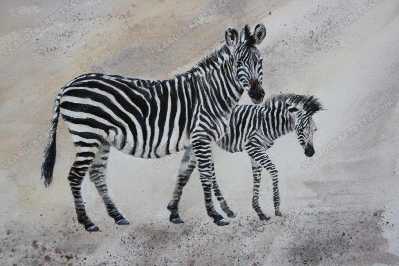 """<span style=""""float:left"""">Crawshay Zebra & foal</span><span style=""""float:right""""><a href=""""https://www.carolbarrett.co.uk/paintings/crawshay-zebra-foal/?from=/african-wildlife-for-sale/"""">More info »</a></span>"""
