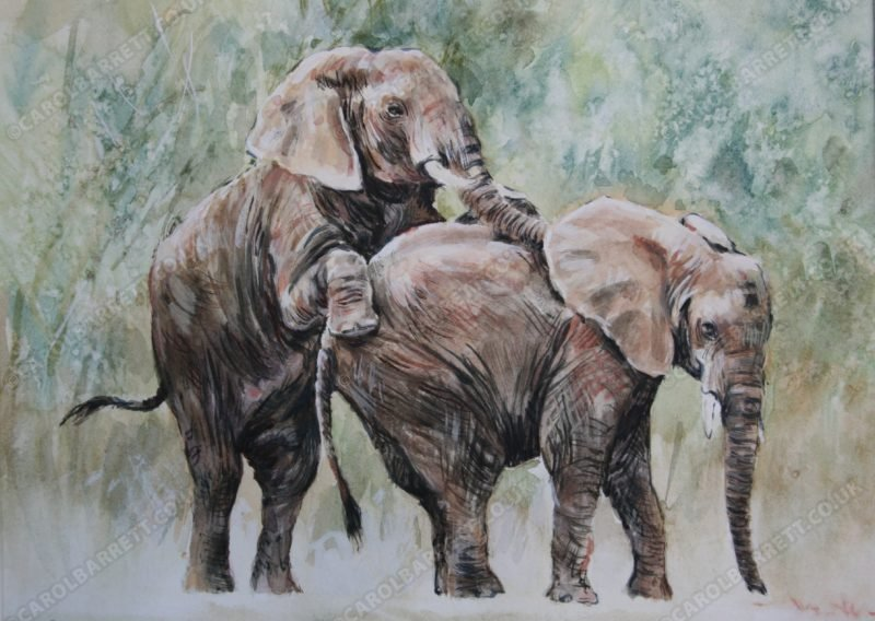 "<span style=""float:left"">Mating attempt</span> <span style=""float:right""><a href=""https://www.carolbarrett.co.uk/paintings/mating-attempt/?from=/elephants-sold/"">More info »</a></span>"