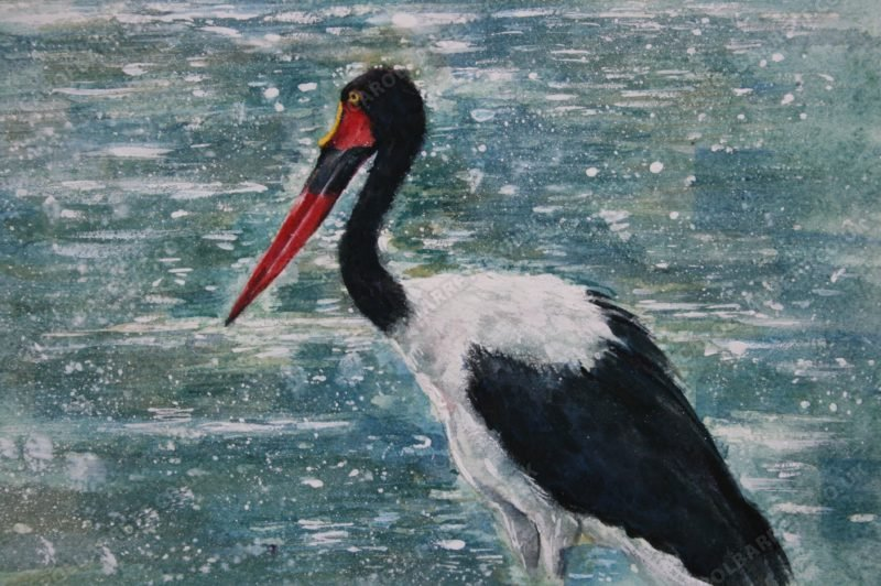"<span style=""float:left"">Saddlebilled Stork</span> <span style=""float:right""><a href=""https://www.carolbarrett.co.uk/paintings/saddlebilled-stork/?from=/birds-for-sale/"">More info »</a></span>"