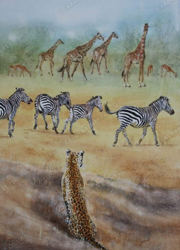 "<span style=""float:left"">Cover blown</span> <span style=""float:right""><a href=""https://www.carolbarrett.co.uk/paintings/cover-blown/?from=/african-wildlife-for-sale/"">More info »</a></span>"