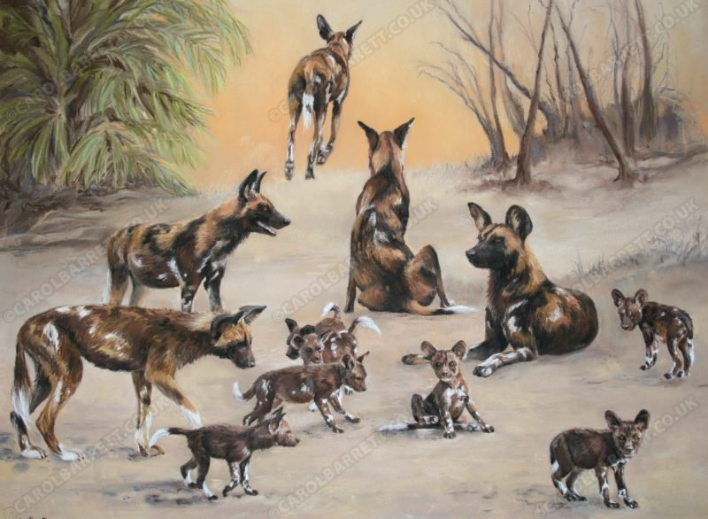 "<span style=""float:left"">Edge of Survival ~ African wild dog</span> <span style=""float:right""><a href=""https://www.carolbarrett.co.uk/paintings/edge-of-survival-african-wild-dog/?from=/wild-dog-hyena-for-sale/"">More info »</a></span>"