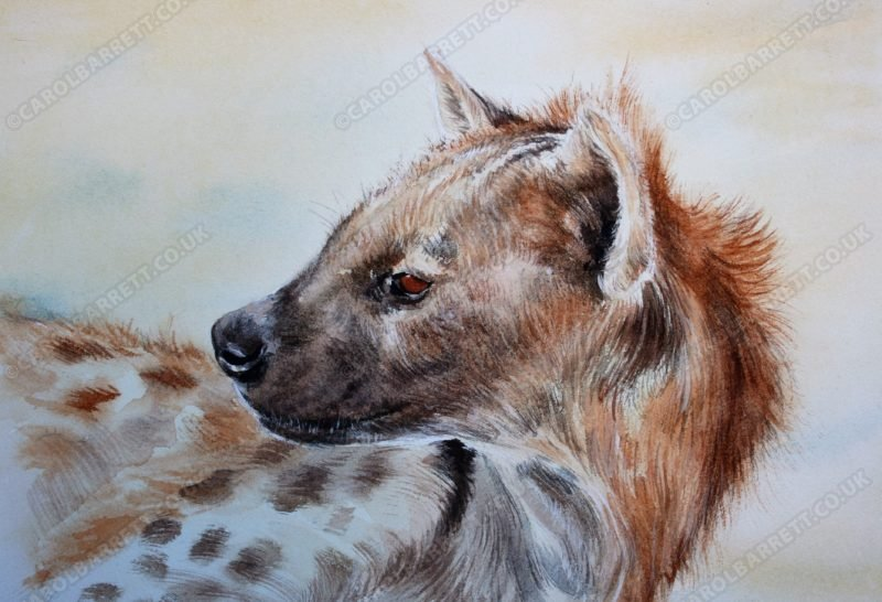 "<span style=""float:left"">Clan Queen, Spotted Hyena</span> <span style=""float:right""><a href=""https://www.carolbarrett.co.uk/paintings/much-maligned-spotted-hyena/?from=/african-wildlife-for-sale/"">More info »</a></span>"