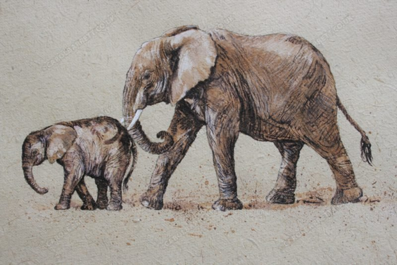 "<span style=""float:left"">Gentle Nudge</span> <span style=""float:right""><a href=""https://www.carolbarrett.co.uk/paintings/gentle-nudge/?from=/elephants-sold/"">More info »</a></span>"