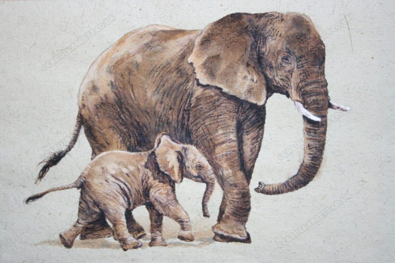 "<span style=""float:left"">Attentive Guardian</span> <span style=""float:right""><a href=""https://www.carolbarrett.co.uk/paintings/attentive-guardian/?from=/elephants-for-sale/"">More info »</a></span>"