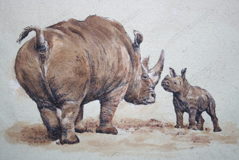"<span style=""float:left"">Big Attitude ~ Southern White Rhino</span> <span style=""float:right""><a href=""https://www.carolbarrett.co.uk/paintings/big-attitude/?from=/african-wildlife-for-sale/"">More info »</a></span>"