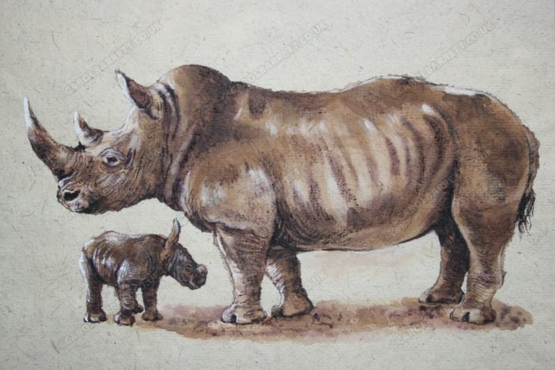 "<span style=""float:left"">Precious ~ Southern White Rhino</span> <span style=""float:right""><a href=""https://www.carolbarrett.co.uk/paintings/precious-southern-white-rhino/?from=/african-wildlife-sold/page/2/"">More info »</a></span>"
