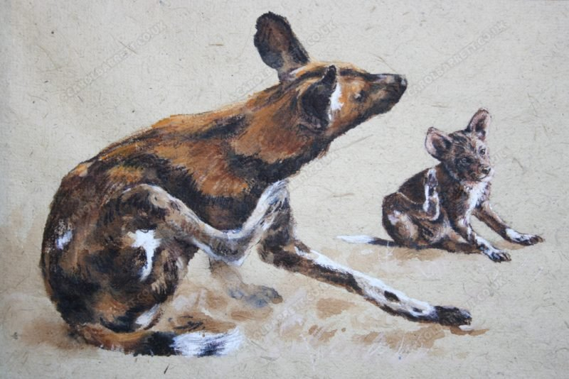 "<span style=""float:left"">Sympathy scratch ~ African Wild dog</span> <span style=""float:right""><a href=""https://www.carolbarrett.co.uk/paintings/sympathy-scratch-african-wild-dog/?from=/african-wildlife-for-sale/"">More info »</a></span>"