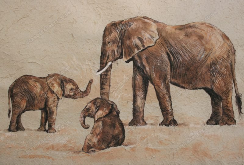 "<span style=""float:left"">Ever watchful</span> <span style=""float:right""><a href=""https://www.carolbarrett.co.uk/paintings/young-friendship/?from=/elephants-for-sale/"">More info »</a></span>"