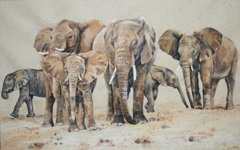 "<span style=""float:left"">Elders' wisdom</span> <span style=""float:right""><a href=""https://www.carolbarrett.co.uk/paintings/elders-wisdom/?from=/elephants-for-sale/"">More info »</a></span>"