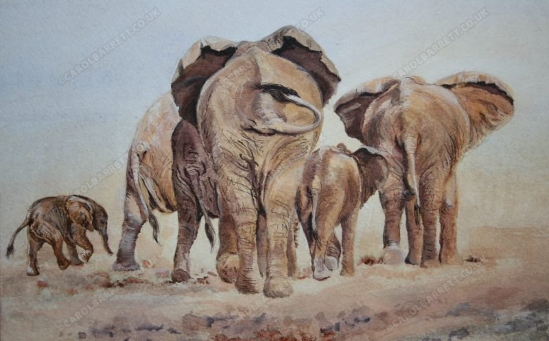 "<span style=""float:left"">The Search (detail)</span> <span style=""float:right""><a href=""https://www.carolbarrett.co.uk/paintings/the-search-detail-2/?from=/elephants-for-sale/"">More info »</a></span>"