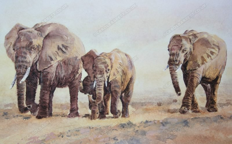 "<span style=""float:left"">The Search (detail)</span> <span style=""float:right""><a href=""https://www.carolbarrett.co.uk/paintings/the-search-detail-3/?from=/elephants-for-sale/"">More info »</a></span>"