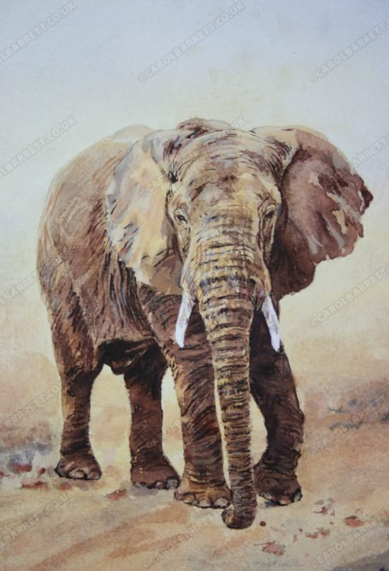 "<span style=""float:left"">The Search (detail)</span> <span style=""float:right""><a href=""https://www.carolbarrett.co.uk/paintings/the-search-detail/?from=/elephants-for-sale/"">More info »</a></span>"