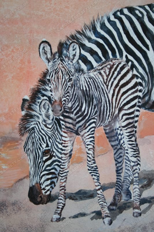 "<span style=""float:left"">Zebra Bonds (detail)</span> <span style=""float:right""><a href=""https://www.carolbarrett.co.uk/paintings/zebra-bonds-detail/?from=/african-wildlife-for-sale/"">More info »</a></span>"