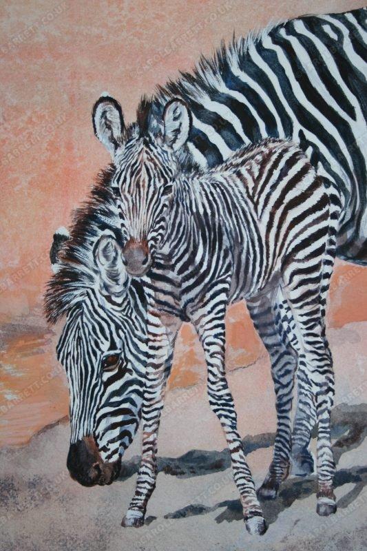 "<span style=""float:left"">Zebra Bonds (detail)</span><span style=""float:right""><a href=""https://www.carolbarrett.co.uk/paintings/zebra-bonds-detail/?from=/african-wildlife-for-sale/"">More info »</a></span>"