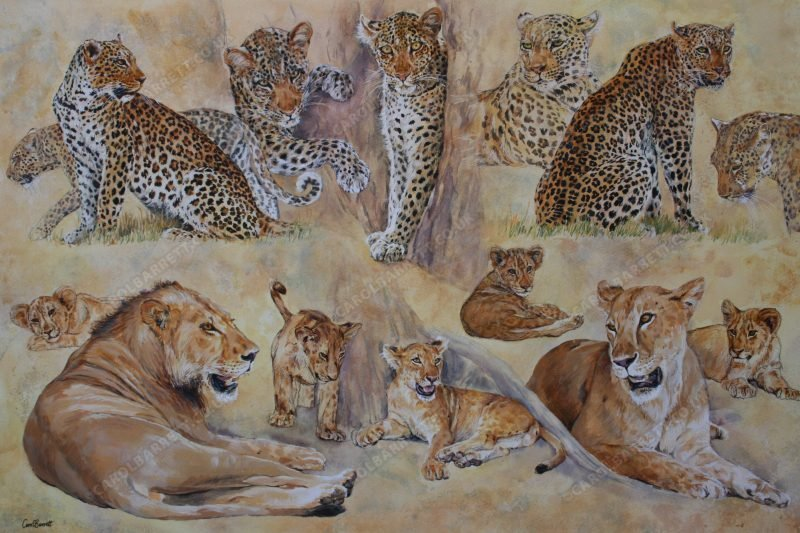 "<span style=""float:left"">Luangwa Big Cats ~ Total sale price will be donated to Born Free</span> <span style=""float:right""><a href=""https://www.carolbarrett.co.uk/paintings/luangwa-big-cats/?from=/big-cats-for-sale/"">More info »</a></span>"