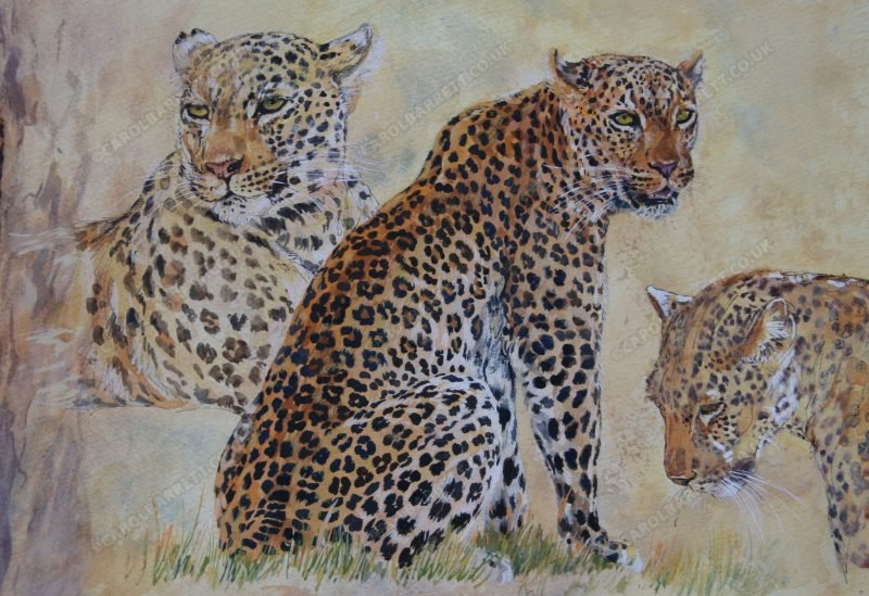 "<span style=""float:left"">Luangwa Big Cats (detail)</span> <span style=""float:right""><a href=""https://www.carolbarrett.co.uk/paintings/luangwa-big-cats-detail/?from=/big-cats-for-sale/"">More info »</a></span>"