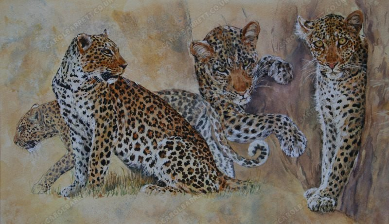 "<span style=""float:left"">Luangwa Big Cats (detail)</span> <span style=""float:right""><a href=""https://www.carolbarrett.co.uk/paintings/luangwa-big-cats-detail-2/?from=/big-cats-for-sale/"">More info »</a></span>"