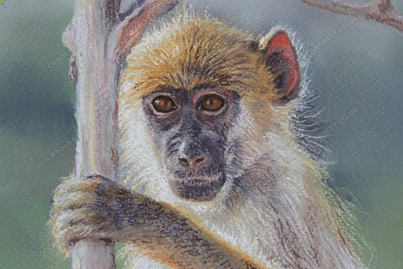 """<span style=""""float:left"""">Not so Innocent (detail)</span><span style=""""float:right""""><a href=""""https://www.carolbarrett.co.uk/paintings/not-so-innocent-detail/?from=/primates-for-sale/"""">More info »</a></span>"""