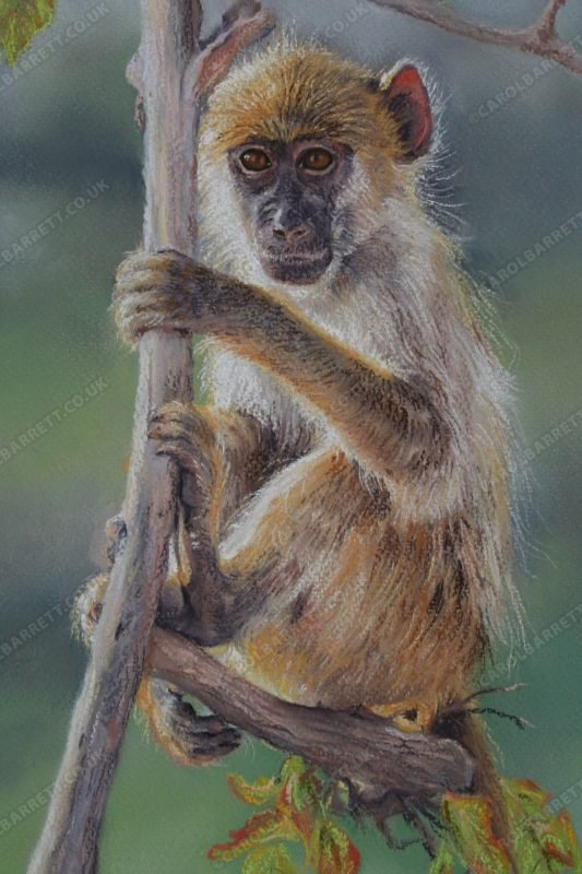 """<span style=""""float:left"""">Not so Innocent</span><span style=""""float:right""""><a href=""""https://www.carolbarrett.co.uk/paintings/not-so-innocent/?from=/primates-for-sale/"""">More info »</a></span>"""
