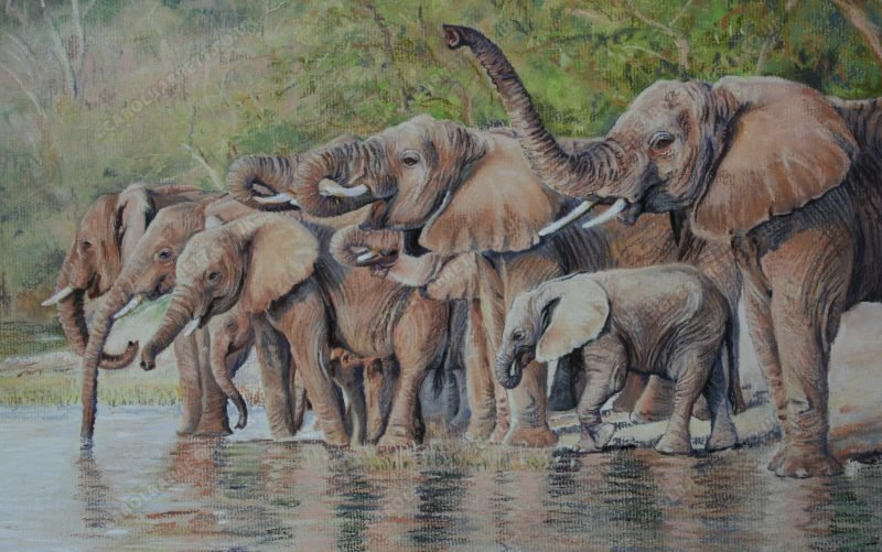 """<span style=""""float:left"""">Daily Ritual</span><span style=""""float:right""""><a href=""""https://www.carolbarrett.co.uk/paintings/daily-ritual/?from=/elephants-for-sale/"""">More info »</a></span>"""